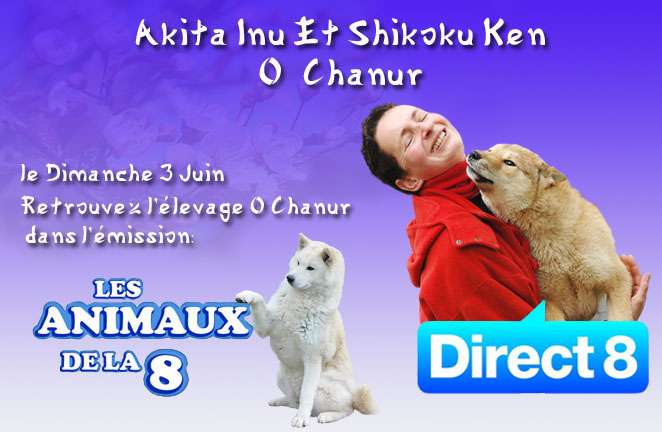 chanur direct 8 les animaux de la 8